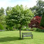 zahrady-travniky